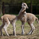 Cria's playing