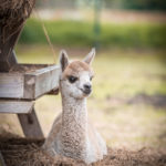Relaxing cria
