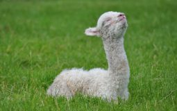 Cria relaxing