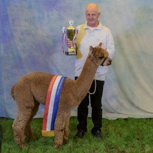 Grand Champion Huacaya Vorstenbosch